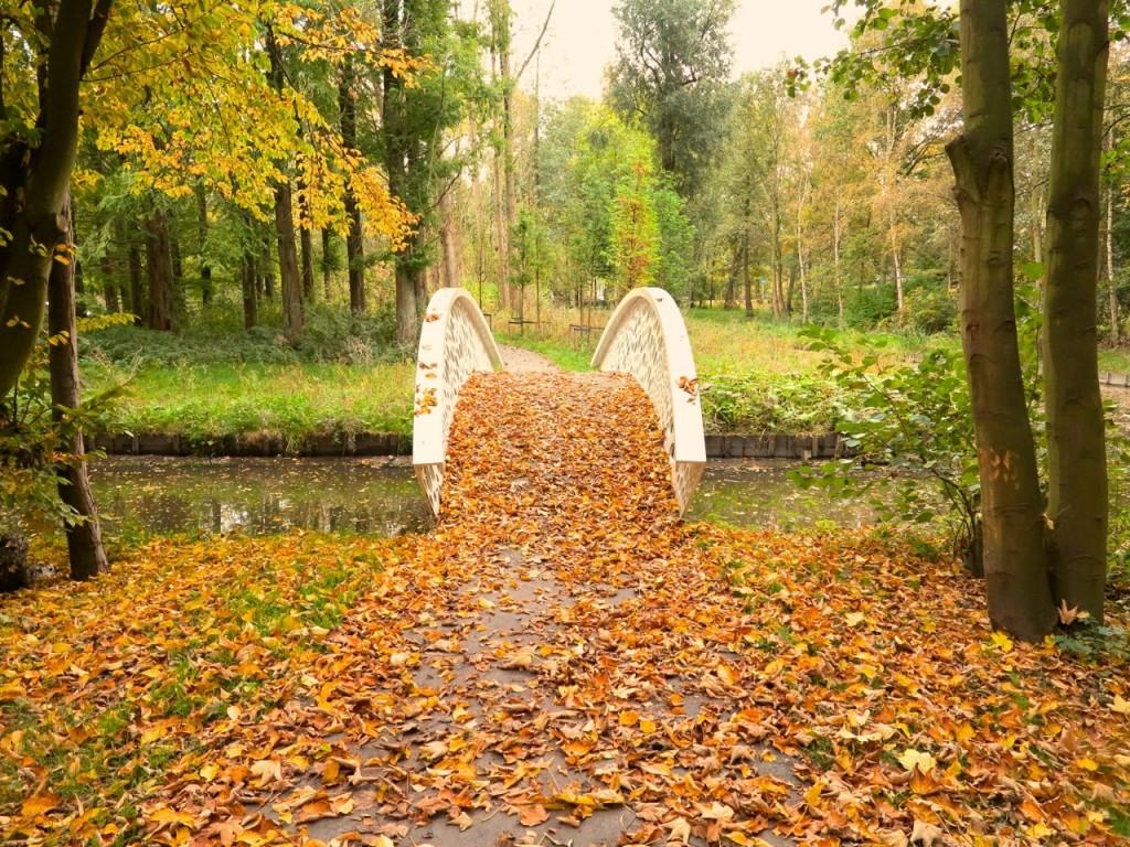 Brug Park Zestienhoven Herfst